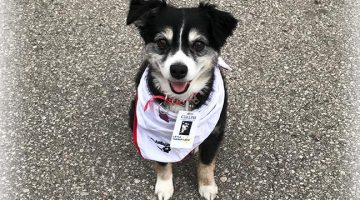 Layla the Therapy Dog